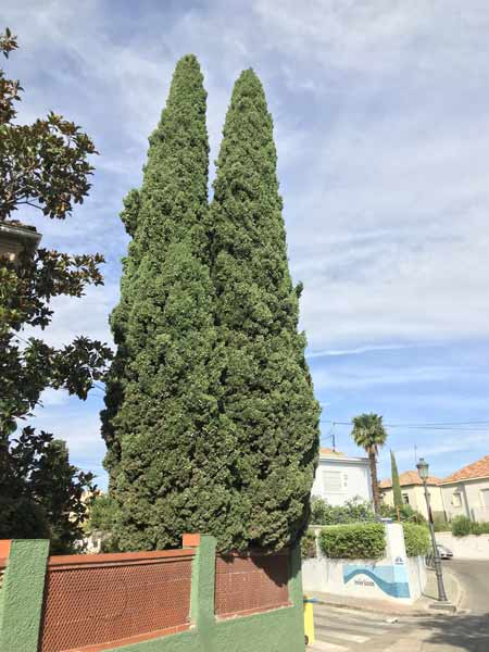 Date-palm-in-front-yard
